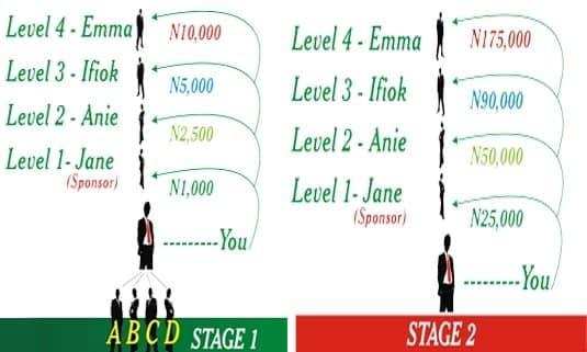 Ecooperative Stages